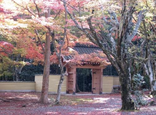 古代の高島を訪ねて 紅葉の寺社仏閣めぐり